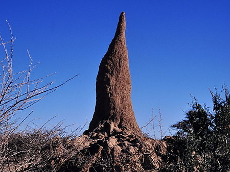 Termite nest in Namibia, By Schnobby [CC BY-SA 3.0 (http://creativecommons.org/licenses/by-sa/3.0)], via Wikimedia Commons